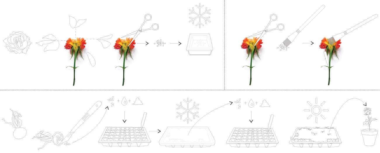 Theo Jones architecture Crystal Palace Park Rosarium rose diagram