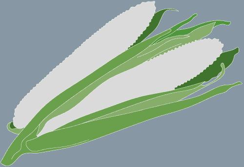 Theo Jones architecture bioplastic sweet corn starch icon logo drawing illustration